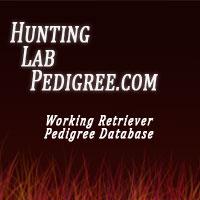 www.huntinglabpedigree.com