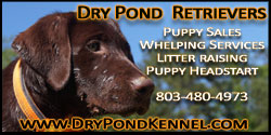 Dry Pond Kennel