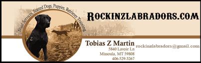 Rockin Z Labradors www.rockinzlabradors.com