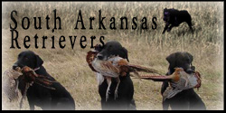 South Arkansas Retrievers