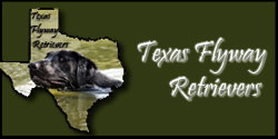 Texas Flyway Retrievers