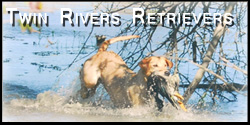 Twin River Retrievers